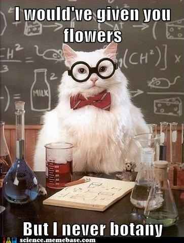 "Chemistry Cat. Recommended by Sumita Mukherjee"" author of keiko and kenzo educational adventure books. www.keikokenzo.com"