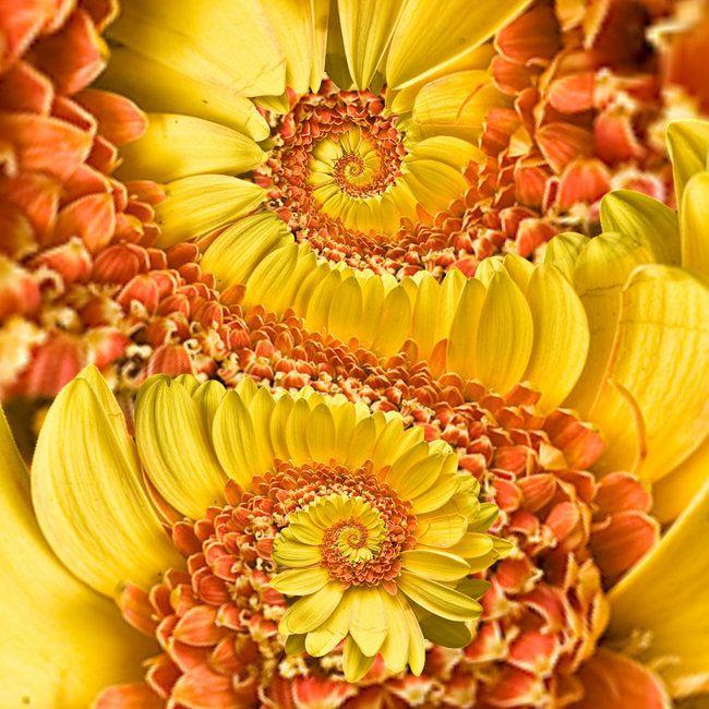 Flower Spirals