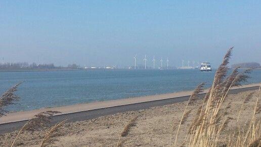 Nieuwe Waterweg - Maassluis