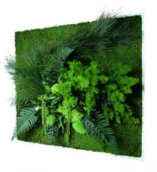 Pflanzenbild / plant picture - conserved moss & fern - great innovative wall decoration