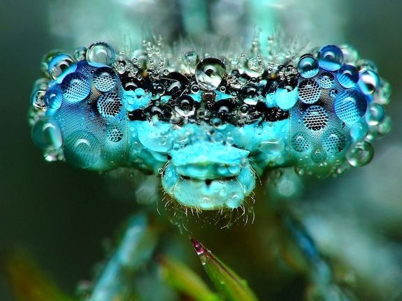Dragonfly Eye.Droplets of dew magnify the lenses in a dragonfly's compound eye.  Credit: Miroslaw Swietek
