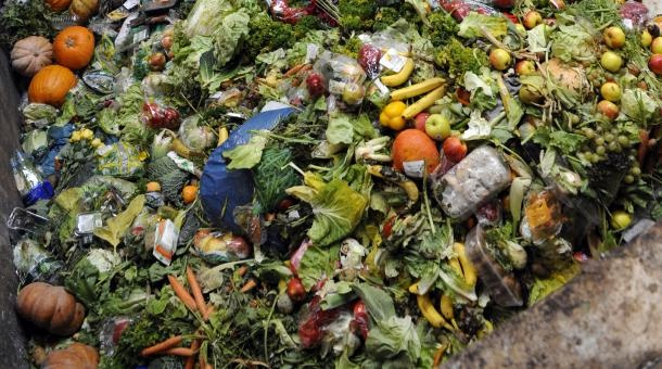 A recent study finds that of the 4 billion tons of food produced in the world each year, about half is thrown away, allowed to rot, or fed to animals.