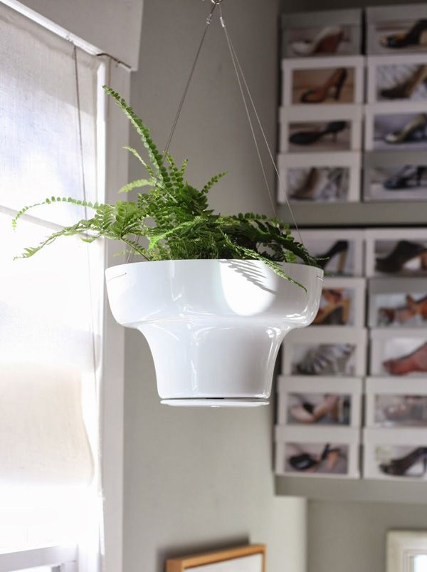 these houseplants will perk up your mood hanging fernsindoor tipspatio