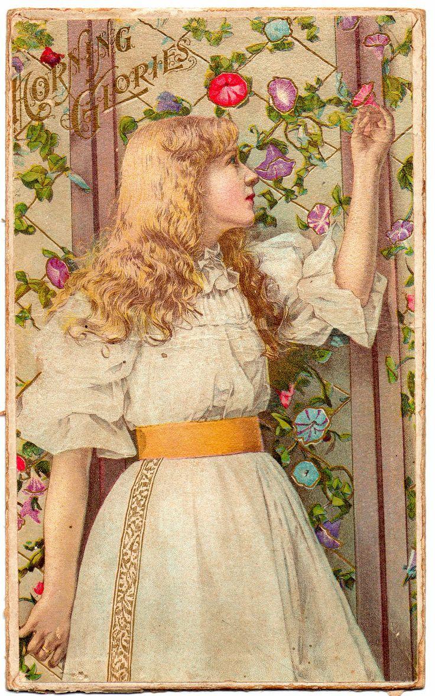 ~ Vintage Trade Card - Morning Glories ~