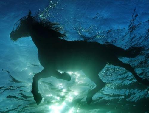 #horse: Hors Swim, Swim Hors, Keep Swim, Sea Hors, Underwater Photography, Summer Heat, Hors Photography, Racing Hors, Animal