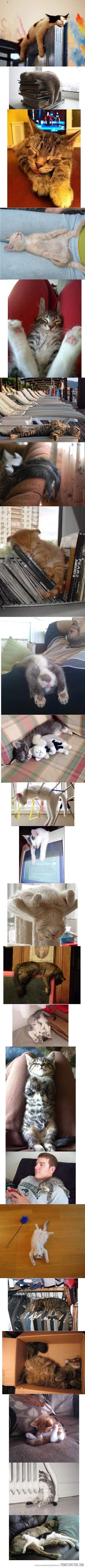 Cats sleep anywhere…