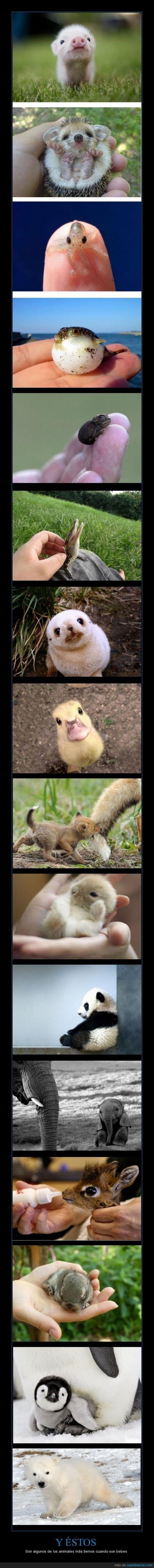 Y ÉSTOS - Son algunos de los animales más tiernos cuando son beb