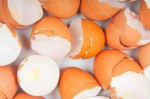 De meerderheid van de mensen gooit eierschalen gewoon weg. In dit artikel zullen we de meest verrassende toepassingen van eierschalen bespreken.