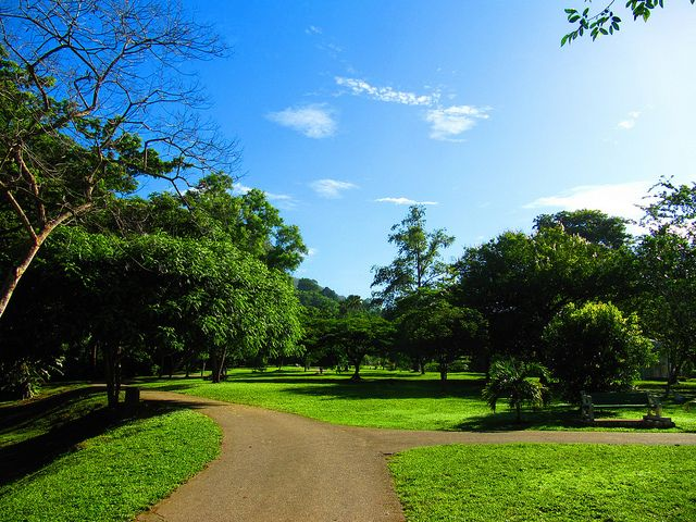 The Official Botanic Garden Of Rutgers: 39 Best Tobago Paradise Images On Pinterest