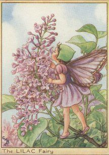 The Song of The Lilac Fairy    White May is flowering,  Red May beside;  Laburnum is showering  Gold far and wide;  But I sing of Lilac,  The dearly loved Lilac,  Lilac, in Maytime  A joy and pride!    I love her so much  That I can never tell  If she's sweeter to look at,  or sweeter to smell.