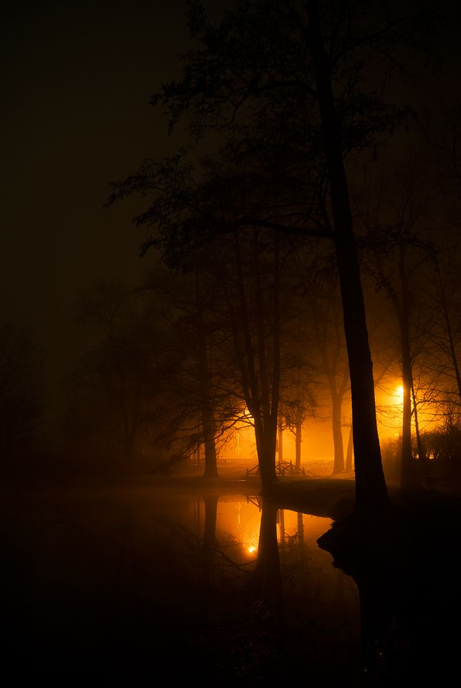 foggy night in park author sulka michael