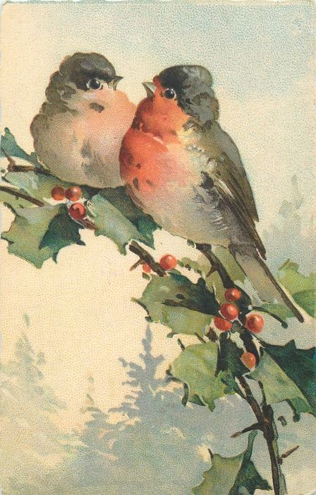 Two red breasted robins on holly branch ~ Catherine Klein