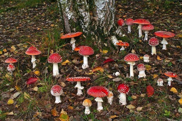 rainy day mushroom pillow A94c0426830ba697a166159cfdbcf240