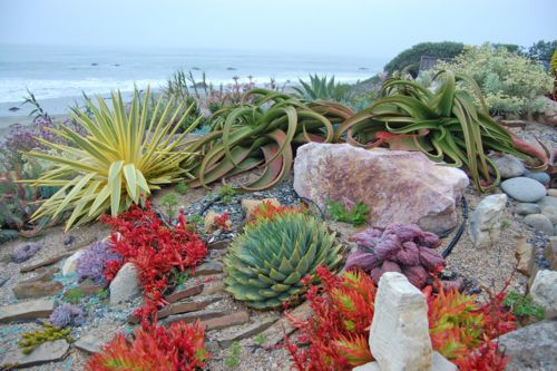 Summer Gardens, Nature, Succulent Gardens, Plants, Pools Gardens, Beach, Flower, Cactus, Cool Photos