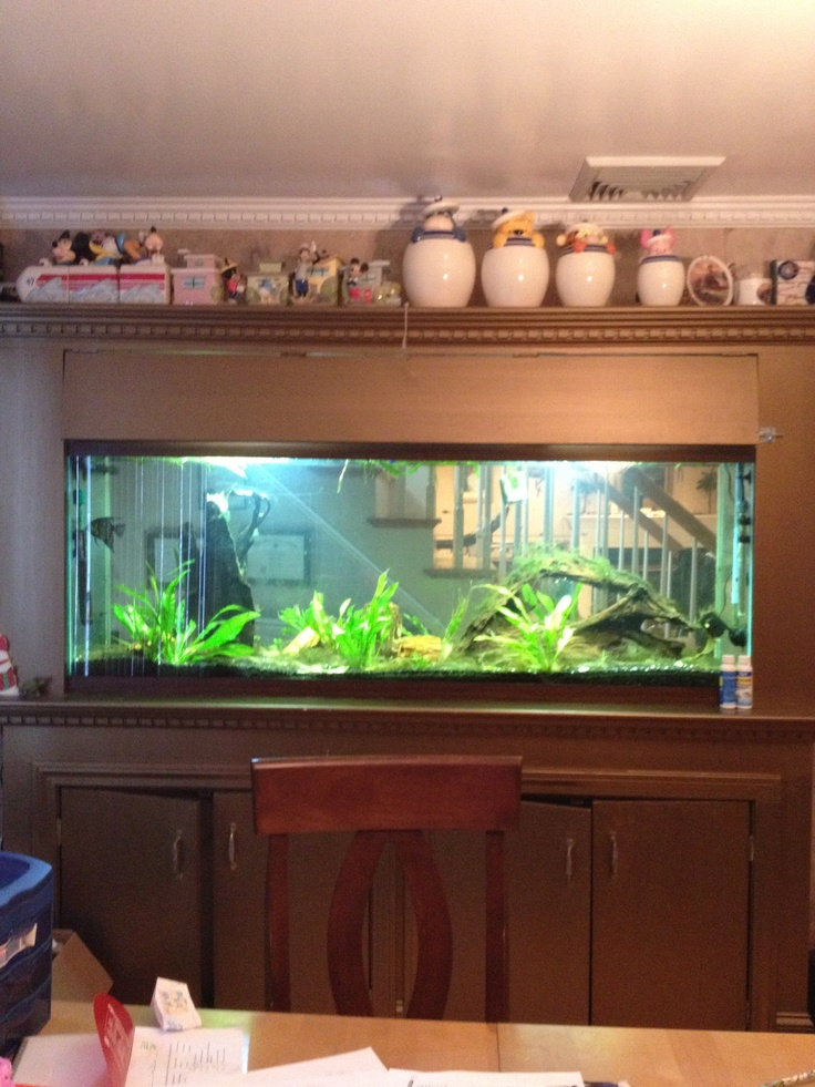 150 Best Tarot Images On Pinterest: Best 25+ 150 Gallon Fish Tank Ideas On Pinterest