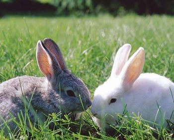 Rabbits: Life Span of a Rabbit