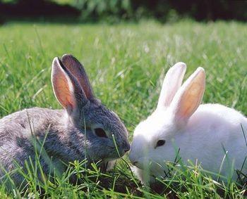 Rabbits: Life Span of a Rabbit