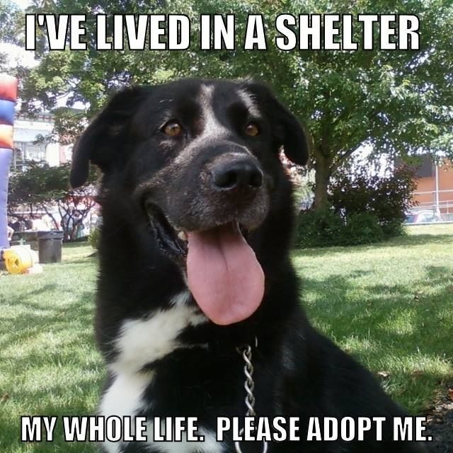 1/2/18 Imagine spending a lifetime without the love of your own family…without a home to call your very own. This is the reality for a handsome dog named Reagan, a dog who has lived an astonishing 10 years without a home. Reagan, a Labrador retriever mix, is being cared for by the SPCA in Cattaraugus County …
