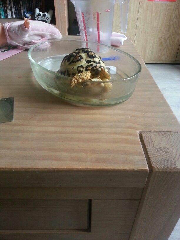 schildpaddensoep ;-) lekker badderen