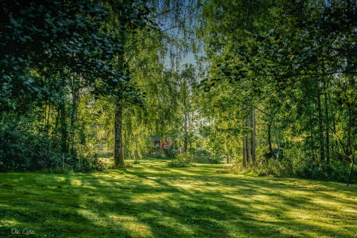 A glimpse back on Summer by Ole Morten Eyra