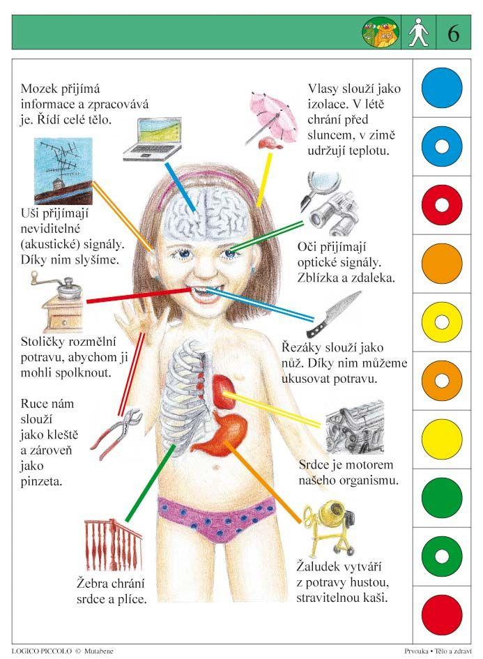 LOGICO PICCOLO | Tělo a zdraví | Didaktické pomůcky a hračky - AMOSEK