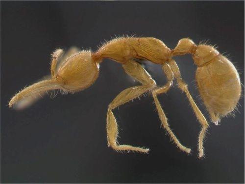 La revolución agrícola de las hormigas comenzó hace 30 millones de años. Fueron esos insectos los que, en un clima seco y similar al desértico, crearon la primera agricultura sostenible y a escala industrial, con la que los cultivos empezaron depender de hormigas agricultoras.  Esas granjas subterráneas producían diversos tipos de hongos, que eran cultivados y cuidados por colonias de hormigas, cuyas descendientes siguen practicando hoy la agricultura.