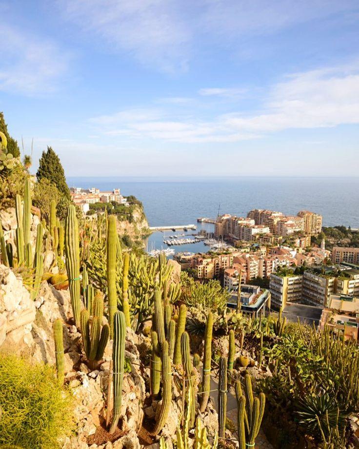 Rocher le jardin exotique de monaco a cliff side cactus for Jardin exotique monaco