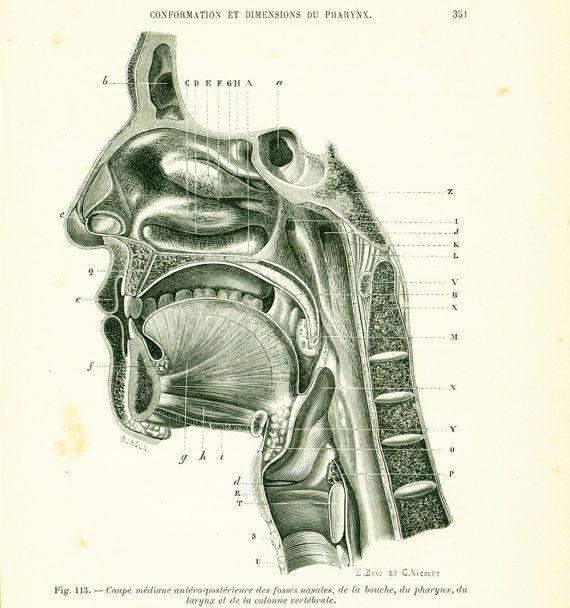 1897 Coupe Mediane Fosse Nasale Bouche Larynx Planche Originale P. Tillaux Anatomie Chirurgie