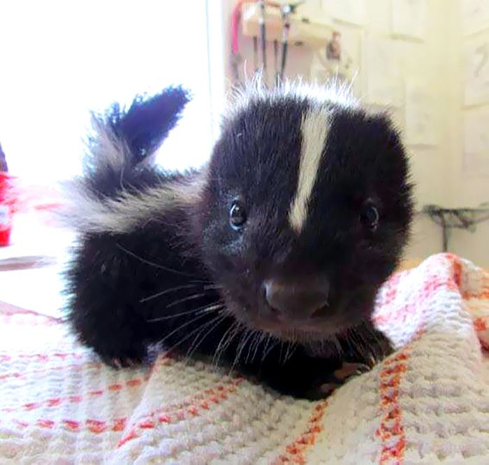 15 Of The Cutest Baby Animals Ever | PostKitty