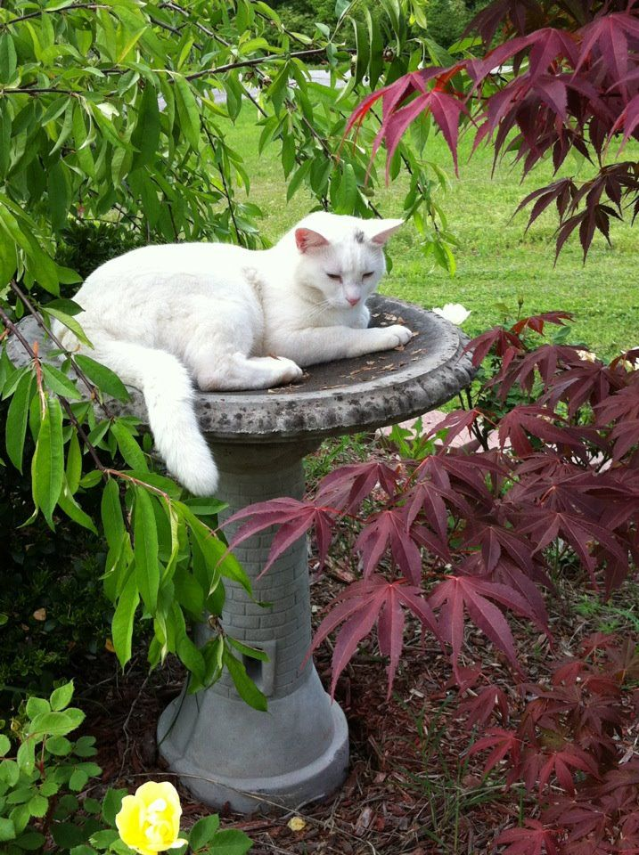 Queen of the garden - waiting for the birds? : )