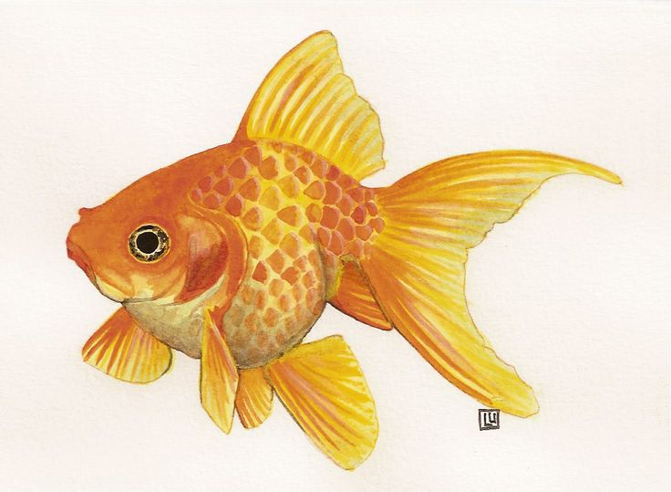 Goldfish Watercolor Paintings | goldfishemail.jpg www.12steps12stories.com
