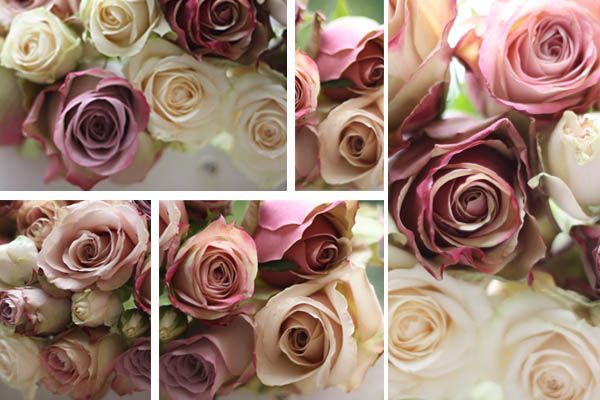 Mixture of dusky pinks...Pepermint Rose, Dusky Pink, Amnesia Rose, Memory Lane Rose and Quicksand Rose