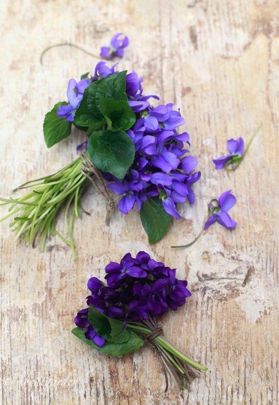 mazzo violette