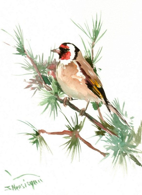 Favori 549 best Watercolor Birds images on Pinterest | Watercolor bird  PV57