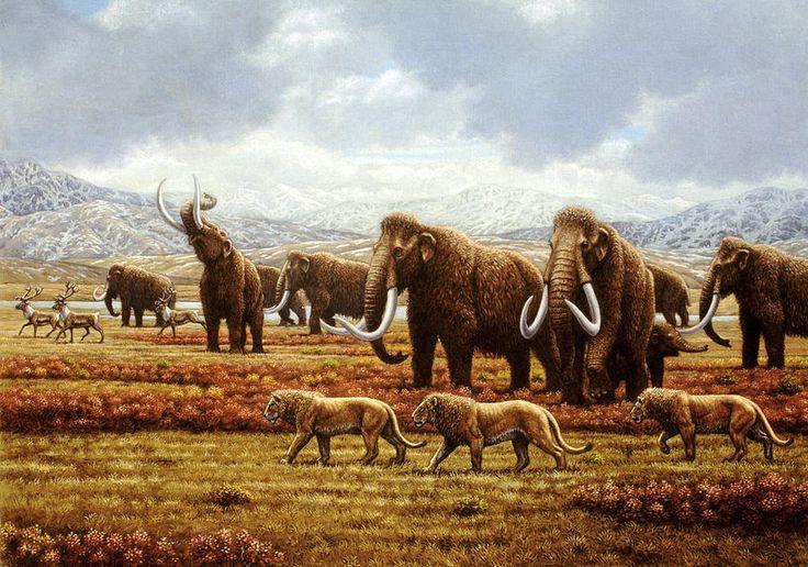 Woolly Mammoths by Mauricio Anton