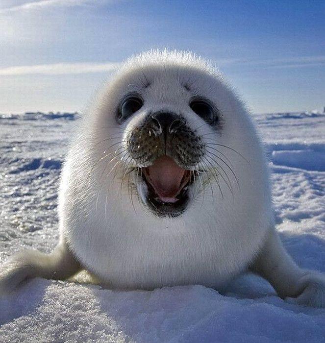 Мышками, арктик смешные картинки