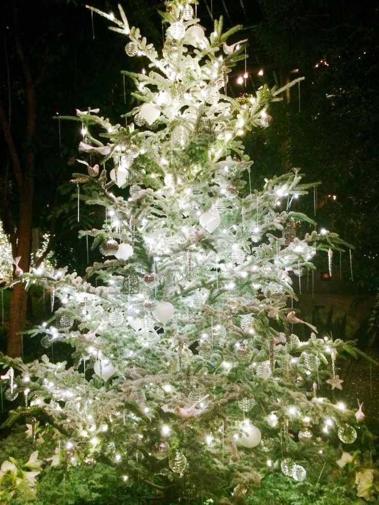 one of the trees on the walk around the arboretum in longwood gardens - Longwood Gardens Christmas Lights