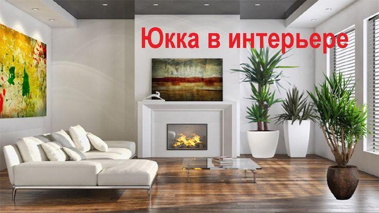 Юкка  Красавица юкка   неприхотливое растение  Фильм 1