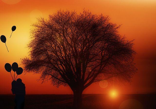 Kostenloses Bild auf Pixabay - Baum, Alleinstehend