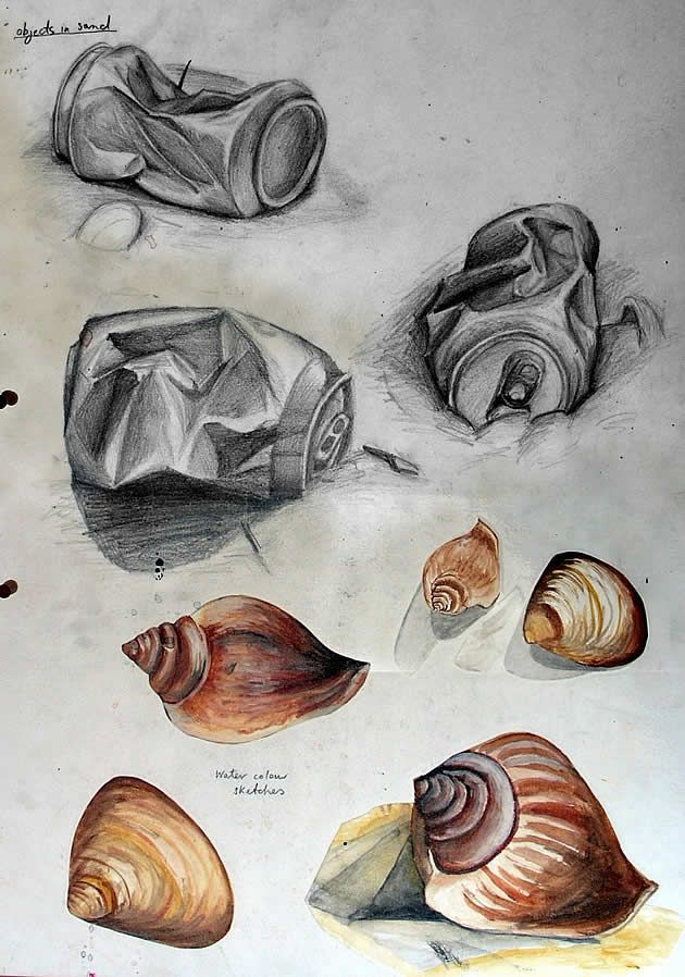 example of a gcse art sketchbook exploring shells