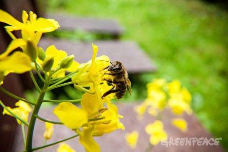 Foto abeja en una flor