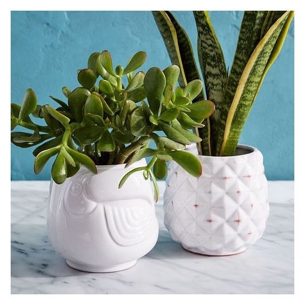 West Elm Ceramic Tropical Planter, White, Pineapple ($19) ❤ liked on Polyvore featuring home, home decor, west elm planters, white home accessories, succulent planters, pineapple home decor and white home decor