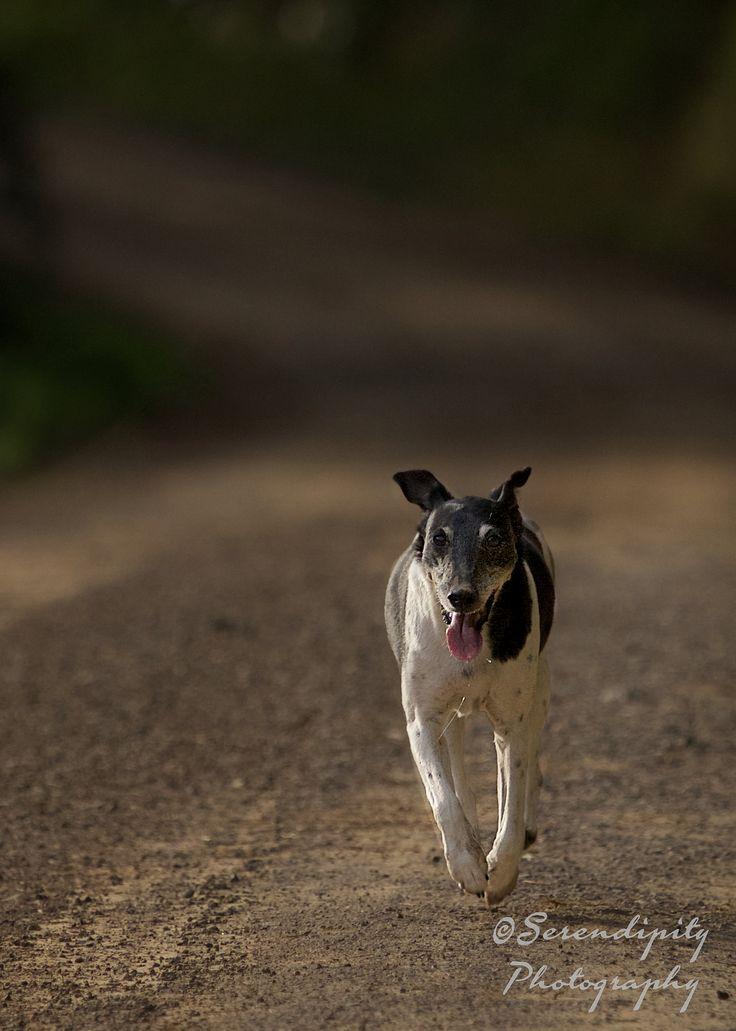 https://flic.kr/p/wvbyvU | Farm dogs (13)