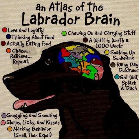 Black Lab Brain Tote Bag Dog Stuff 3 Dogs Labrador Retriever