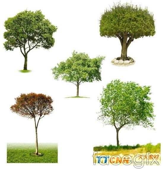 Five trees PSD