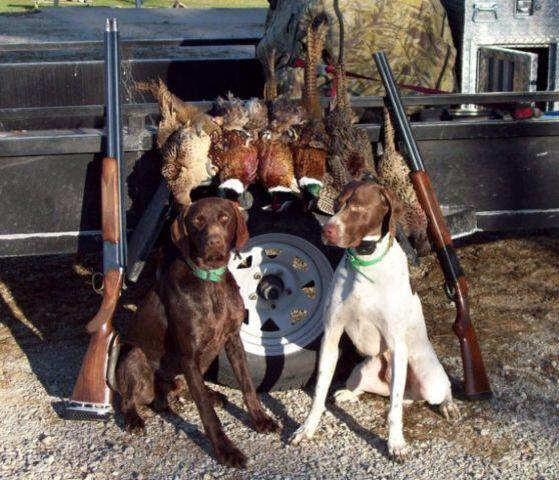 Hunting buds