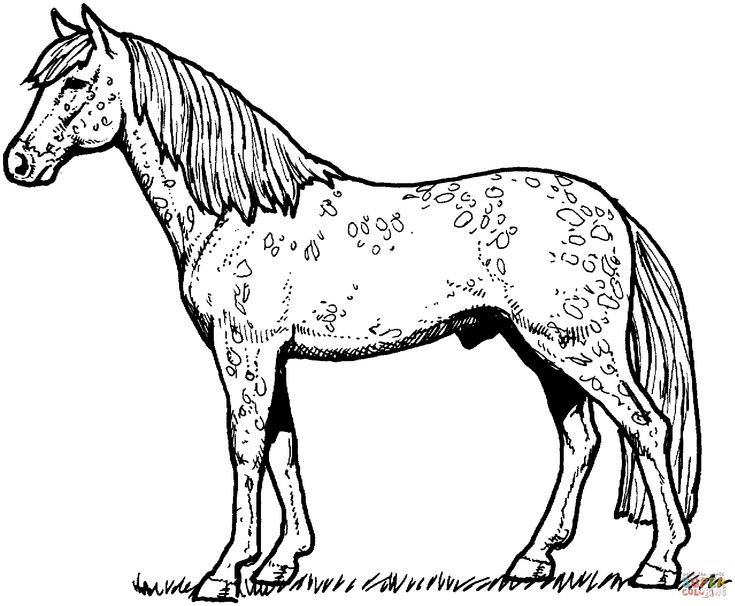 Appaloosa Horse Coloring Page From Horses Category Select 27278 Printable Crafts Of Cartoons Nature Animals Bible And Many More