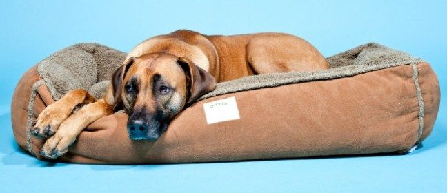 Top 15 Gadgets For Your Pet