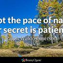 Adopt the pace of nature: her secret is patience. Ralph Waldo Emerson  https://www.brainyquote.com/photos_tr/en/r/ralphwaldoemerson/106883/ralphwaldoemerson1-2x.jpg Travis Raml, CPA & Associates, LLC - Columbia Maryland CPA