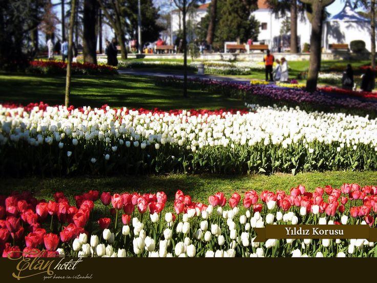Lale festivali kapsamında Yıldız Korusu'na 50 farklı türde 830.000 lale dikildi. :) #elanhotelistanbul #istanbul #tulip #lale #yildizkorusu #Turkey #Turkiye